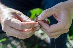 Il pescatore mette il verme sul gancio immagine stock libera da diritti