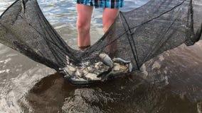 Il pescatore prende la gabbia dall'acqua, in cui molto il pesce è rovesciato stock footage