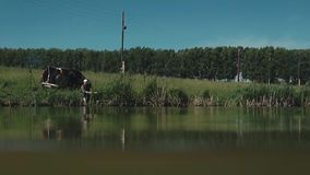 Il pescatore si siede sulla riva del lago stock footage