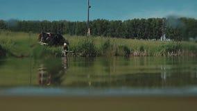 Il pescatore si siede sulla riva del lago video d archivio