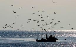 Il pescatore sulla sua barca ha seguito da una folla dei gabbiani, colpo in Hvar, Croazia Immagini Stock