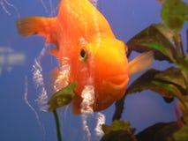 Il pesce Immagini Stock