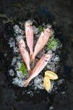 Il pesce crudo della triglia con il limone, la menta ed i rosmarini sullo scheggiato su ghiacciano il contesto di pietra scuro immagini stock libere da diritti