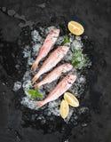Il pesce crudo della triglia con il limone, la menta ed i rosmarini sullo scheggiato su ghiacciano il contesto di pietra scuro fotografia stock libera da diritti