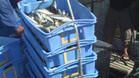 Il pesce del pescatore dell'industria di pesca professionale prende la barca ai bacini di pesca video d archivio