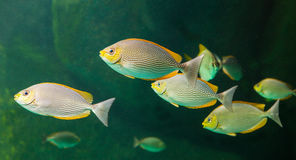 Il pesce dell'acquario con gli animali di corallo ed acquatici fotografia stock
