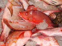 Il pesce della scogliera fresly ha preso dai pescatori filippini artigianali Fotografia Stock Libera da Diritti