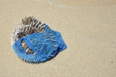 Il pesce della soffiatore ha lavato su in un sacchetto di plastica Inquinamento di plastica nel problema ambientale dell'oceano fotografia stock libera da diritti