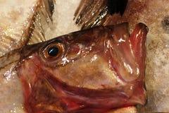 Il pesce di St Peter immagini stock