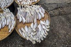 Il pesce essiccato ha venduto il paesino di pescatori Fotografia Stock