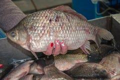 Il pesce fresco crucian è venduto al bazar Fotografie Stock Libere da Diritti