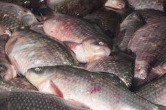 Il pesce fresco crucian è venduto al bazar Immagini Stock Libere da Diritti