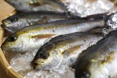 Il pesce fresco di Chigyo ha attaccato di mattina al vassoio di bambù con ghiaccio Fotografie Stock