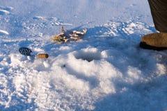Il pesce persico ed il cucchiaio per ghiaccio di scavatura sono vicino al foro per il pesce di cattura, sulla superficie di un la fotografia stock libera da diritti