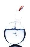 Il pesce rosso che salta da una ciotola Fotografia Stock Libera da Diritti