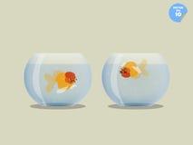Il pesce rosso in ciotola sta guardando il pesce rosso morto in altra ciotola Fotografia Stock
