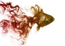 Il pesce rosso dal fumo fotografia stock