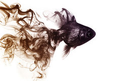 Il pesce rosso dal fumo fotografia stock libera da diritti