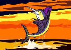 Il pesce vela del Pacifico che salta nel tramonto Fotografia Stock