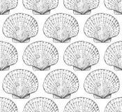 il pettine senza cuciture del modello è un mollusco bivalve marino del Pectinidae della famiglia le lumache di mare, vivono in tu illustrazione vettoriale
