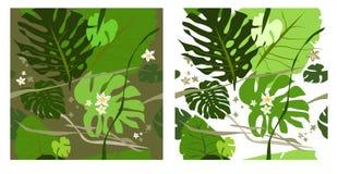 Il Philodendron lascia senza giunte Fotografia Stock
