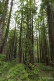 Il più chiaro modo nell'universo è attraverso una regione selvaggia della foresta ~ John Muir Fotografia Stock