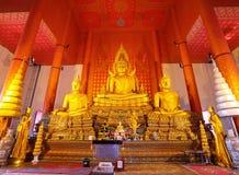 Il più grande Buddha dorato con il suo san in Samuth Immagine Stock