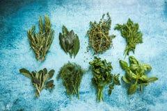 Il piano aromatico delle spezie e delle piante aromatiche mette sulla tavola Fotografie Stock