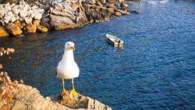 Il piccione sta per vedere il tramonto con il fondo blu del mare Immagine Stock Libera da Diritti