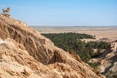 Il picco della montagna nel deserto Fotografia Stock