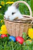 Il piccoli coniglio ed uova di Pasqua in un'erba immagini stock