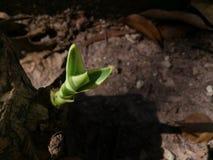 Il piccolo albero Fotografia Stock