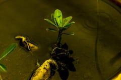 Il piccolo albero in acqua immagine stock libera da diritti