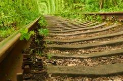 Il piccolo albero di acero sta germogliando fra le traversine della ferrovia ed il gr Fotografie Stock Libere da Diritti
