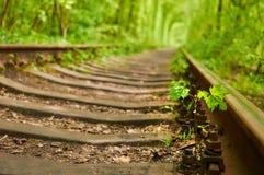 Il piccolo albero di acero sta germogliando fra le traversine della ferrovia ed il gr Immagini Stock Libere da Diritti