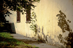 Il piccolo albero ha attraversato l'asfalto Fotografia Stock