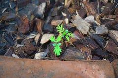 Il piccolo albero sta crescendo 0922 fotografie stock libere da diritti