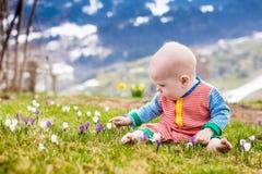 Il piccolo bambino che gioca con il croco fiorisce nelle montagne delle alpi Fotografie Stock Libere da Diritti