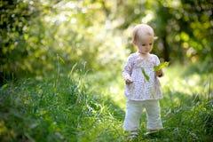 Il piccolo bambino negli aceri della holding della foresta va Immagine Stock
