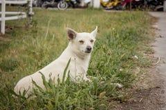 Il piccolo cane che gioca nell'erba immagine stock libera da diritti