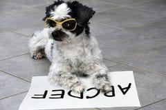 Il piccolo cane moggy impara leggere fotografia stock