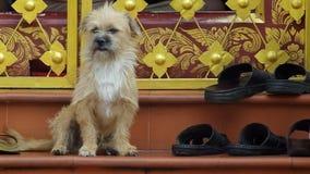 Il piccolo cane sta collocando sulla scala archivi video