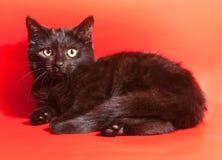 Il piccolo colore del cioccolato del gattino si trova su rosso Immagine Stock