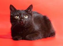 Il piccolo colore del cioccolato del gattino si trova su rosso Fotografia Stock