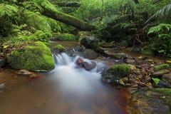 Il piccolo corso d'acqua in foresta che attraversa il muschio ha coperto i ceppi e le rocce di albero fotografia stock