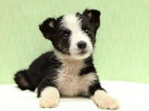 Il piccolo cucciolo in bianco e nero sul letto fotografia stock libera da diritti