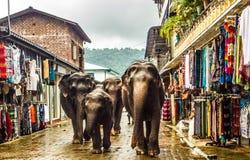 Il piccolo elefante è andato commercializzare Immagine Stock