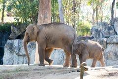 Il piccolo elefante con la madre Fotografia Stock Libera da Diritti