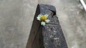 il piccolo fiore Immagine Stock Libera da Diritti