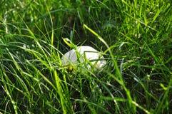 Il piccolo fungo del palloncino in mezzo al prato fotografia stock